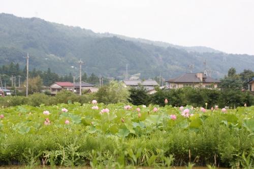 karuizawa_196.jpg