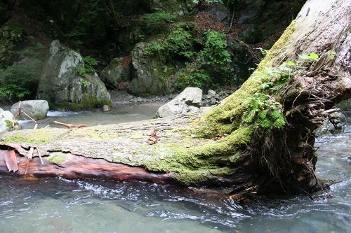 karuizawa_678.jpg