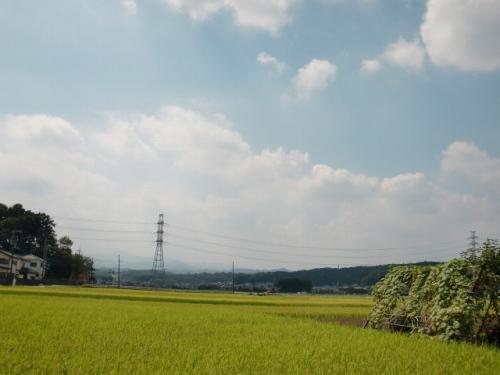 kasumi_75.jpg