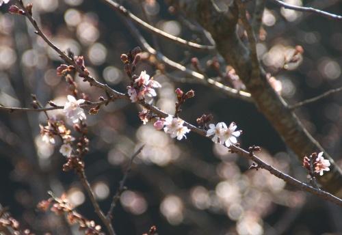 okumusasi_311.jpg