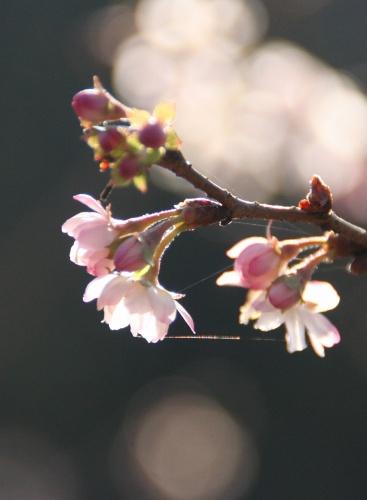 okumusasi_335.jpg