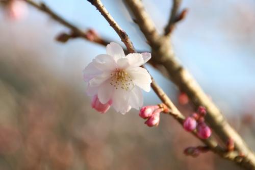 okumusasi_352.jpg