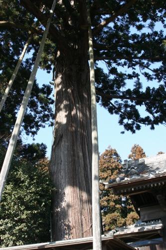 sisi-isihara_003.jpg