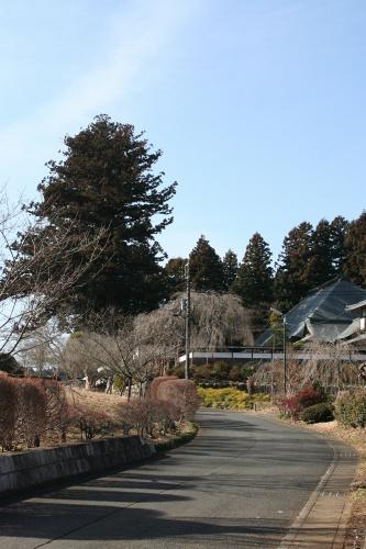 sisi-isihara_043.jpg