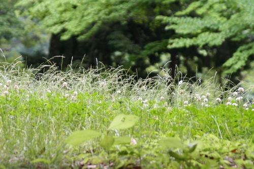 syoubu_178.jpg