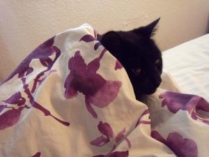 puma qui a froid