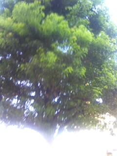 ドトール前の木バイト直前
