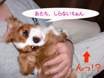 CIMG0542_convert_20100308202913のコピー
