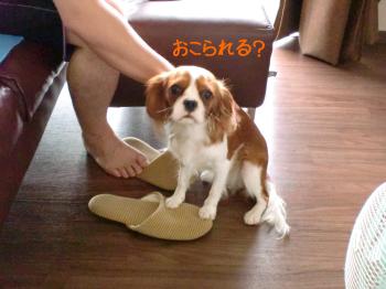 CIMG3236き