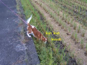 kunSBSH0139のコピー