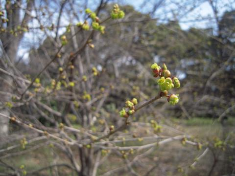 まだまだいろいろ咲いていました