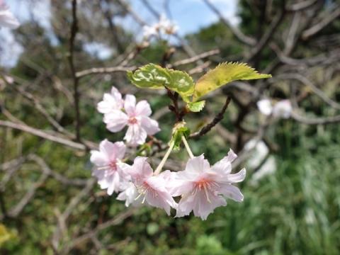 皇居東御苑にも秋の花