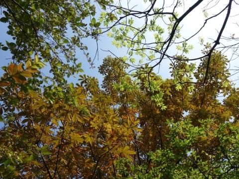 皇居東御苑で秋を感じました
