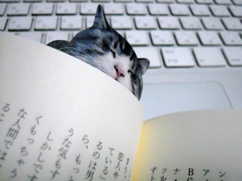 猫の栞でなごんでいます