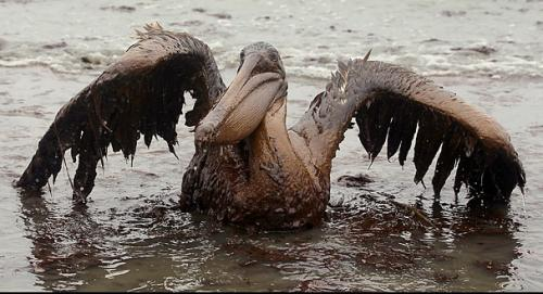 Victims of the BP Oil Spill