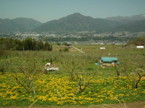 120428-りんご畑