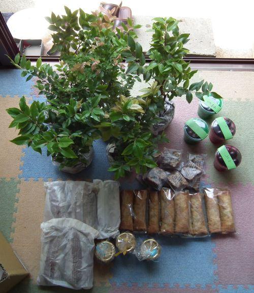 120429-ジャボチカバの苗とお菓子