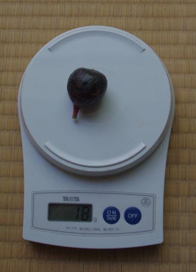 20120825 ロンドボーデックス1