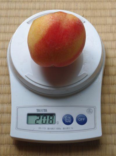 120830-バイオチェリー台黄桃1