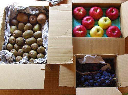 121020-キウイぶどうリンゴ