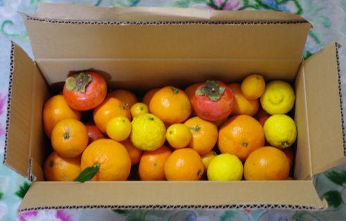 121209-四保さんより柑橘など