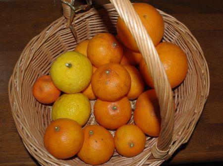 130226-オレンジバスケット