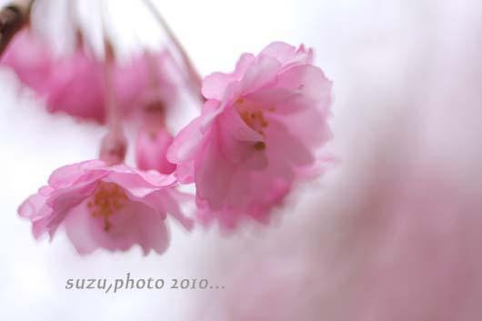 IMG_3435a1.jpg