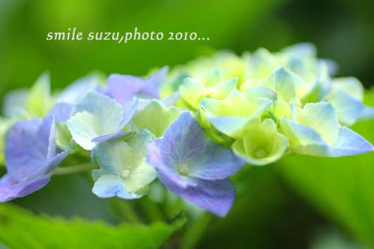 IMG_4632ab.jpg