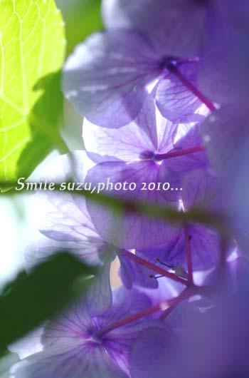 IMG_4824aa.jpg