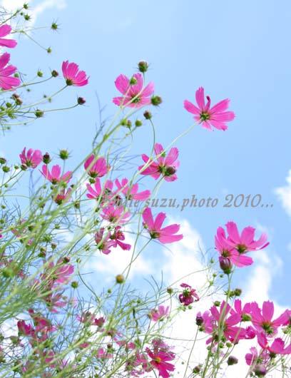 IMG_5909t.jpg
