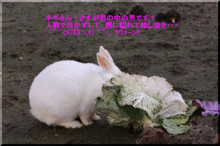 ネギウサギ2