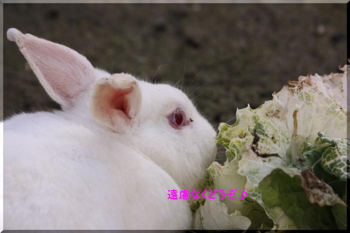 ネギウサギ3