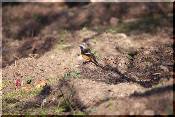 梅林公園鳥3
