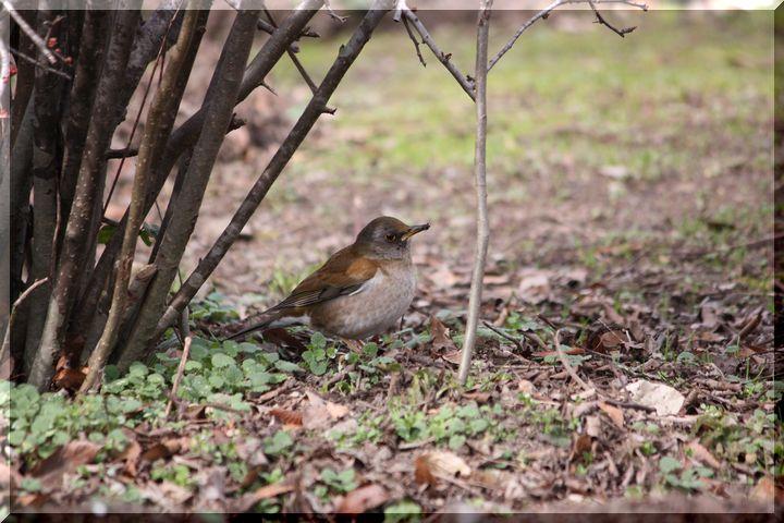 梅林公園鳥5