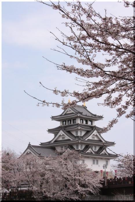 ~ 一夜城と桜1