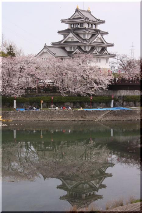 ~ 一夜城と桜5