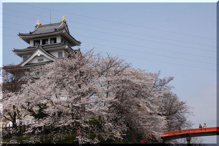 ~ 一夜城と桜9
