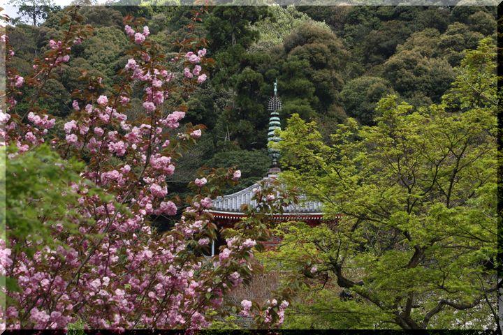 岐阜公園春7