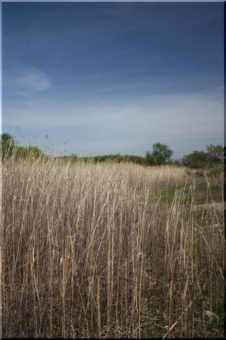 ~ かさだ湿原12