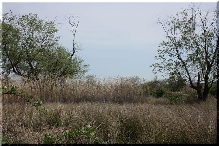 ~ かさだ湿原11