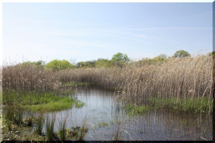 ~ かさだ湿原13