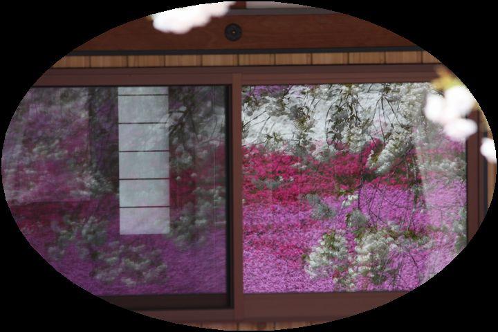 ~ 郡上芝桜3