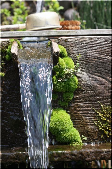 水仙と芝桜11