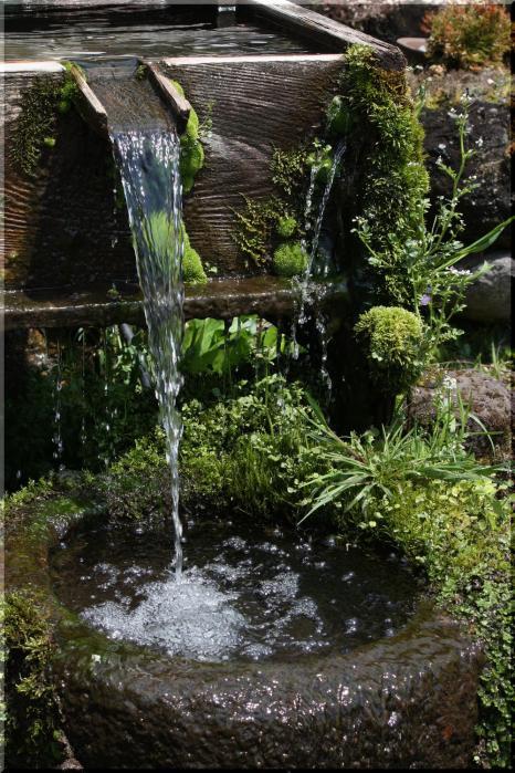 水仙と芝桜12