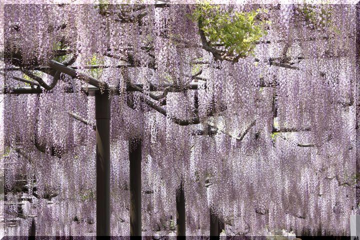 竹鼻フジ9