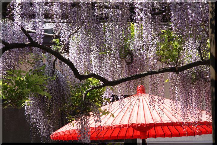 竹鼻和傘3