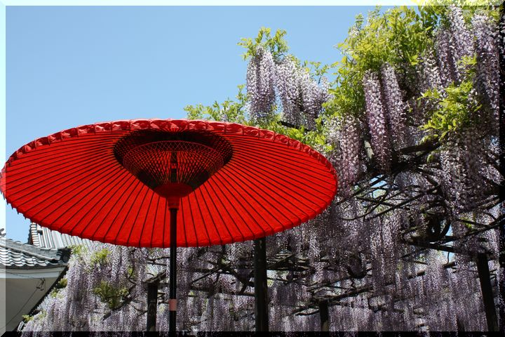 竹鼻和傘8