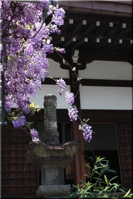 本覚寺12