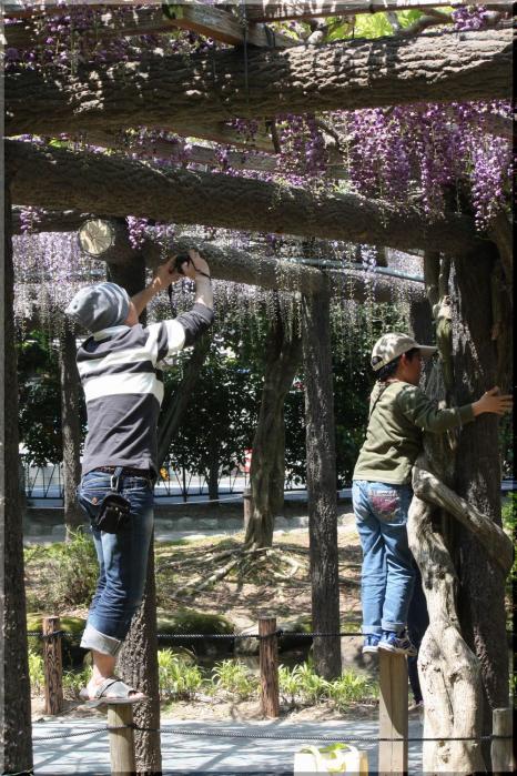 天王公園 フジ人3