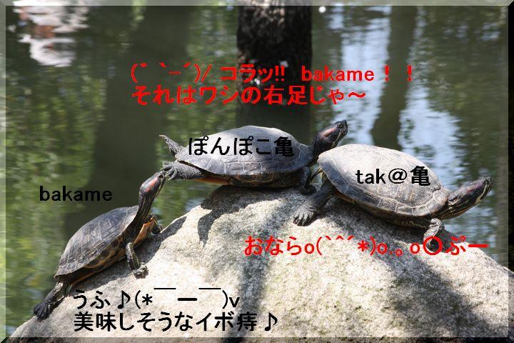 天王公園 フジ人6